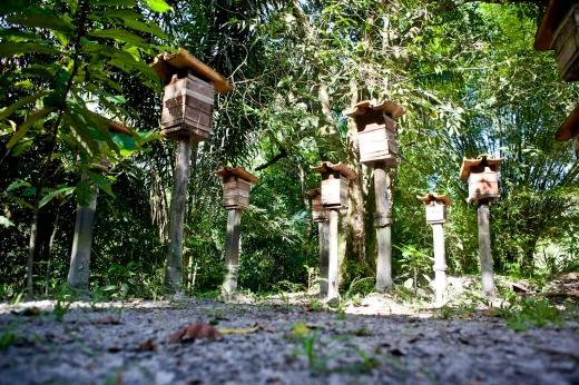 As donas de casa podem produzir mel em casa, instalando várias colmeias - o meliponário (foto) no quintal. Foto: Rafael Araújo