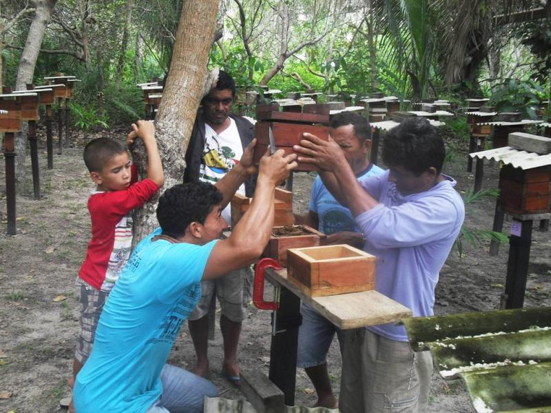 comunitários fazem a reprodução controlada do plantel. Praia Verde, Almeirim, PA. Dez. 2014