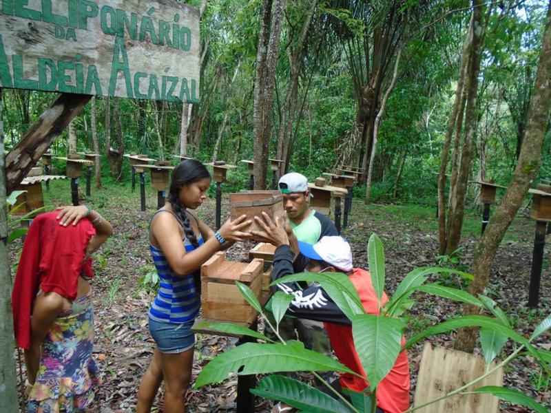Indígenas da Aldeia Açaizal (Oiapoque, AP) realizam reprodução controlada das matrizes. Abr. 2016
