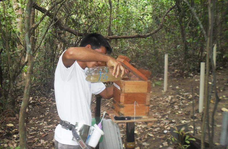 Mazinho, monitor de meliponicultura, realiza a alimentação complementar para acelerar o desenvolvimento de ninhos recém reproduzidos. Santana, Monte Alegre, PA. Fev. 2015