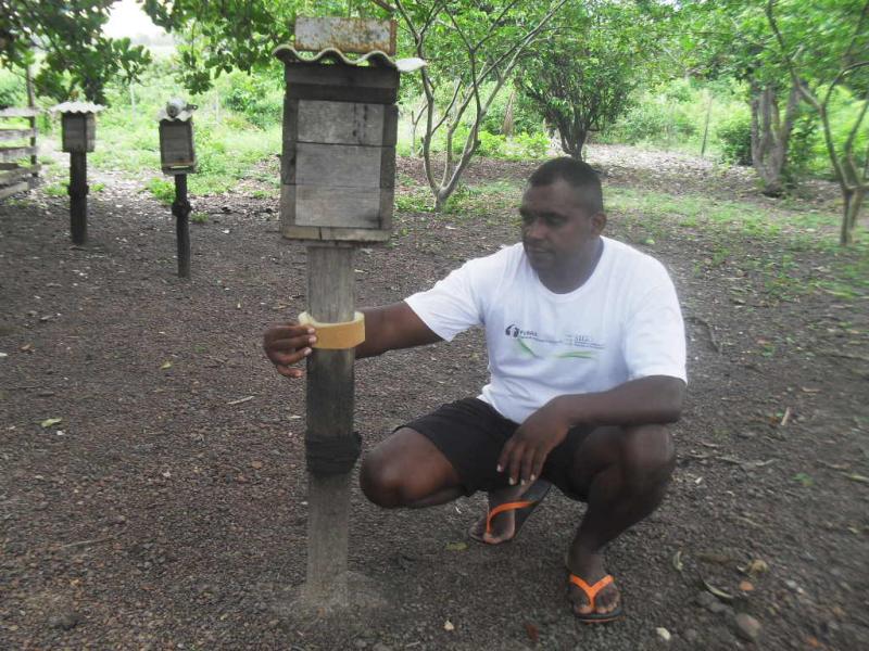 Projeto Néctar encontrou meliponários fragmentados e depreciados no quilombo Mel da Pedreira, Oiapoque, AP. Nov. 2014