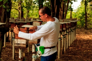 Manejo de meliponário de abelhas nativas (Melipona flavolineata), Curuçá-PA
