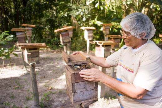 Associada da Asmelc manipula colmeia em seu quintal. em 2012, a associação construiu um plano de ação e fortalecimento organizacional