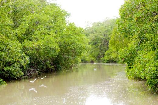 A Reserva Extrativista Mãe Grande Curuçá que guarda uma das maiores extensões de mangue do Pará (Foto: Rafael Araújo)