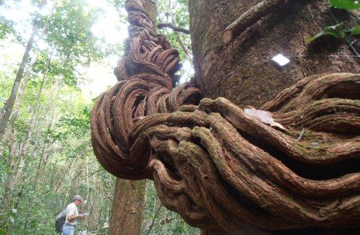 Matas ainda guardam vegetação remanescente que formou parte da cobertura vegetal do nordeste do Pará há mais de 500 anos