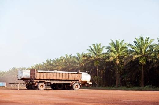Nordeste do Pará está se tornando um grande pólo brasileiro de produção de óleo de palma (Foto: Rafael Araújo)