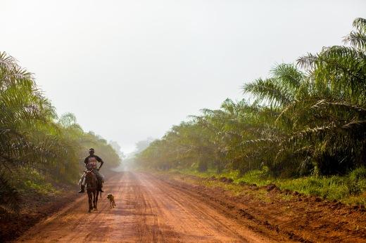 No Brasil, as experiências de uso do conceito AVC já ocorrem no setor de produção de óleo de palma (Foto: Rafael Araújo)