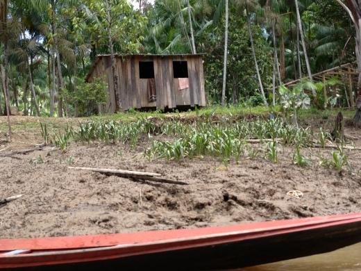 Áreas de várzea de Cachoeira do Arari, área onde se localizam os assentamentos agroextrativistas (Foto: Instituto Peabiru)